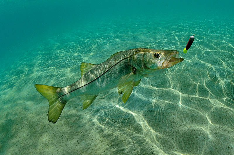 fishing rod rentals in cape canaveral